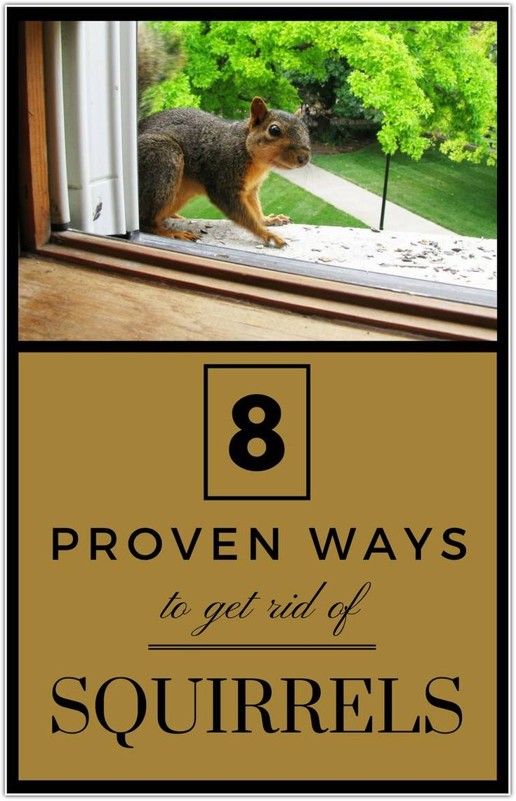 How to get rid of squirrels in your garden get rid of