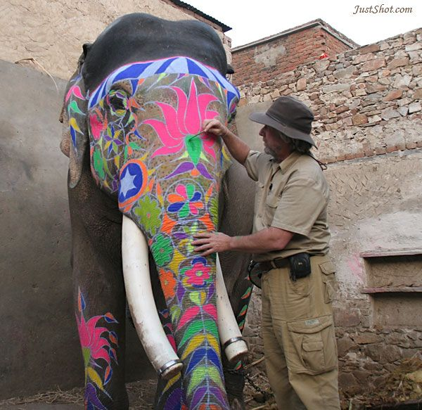 Painted Indian Elephant Face Patterns in white paint,