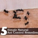 Plant Care Today - April 3, 2012Control Pest, Pest Control, Gardening Yards Ideas, Outdoor, Simple Nature, Gardens, Control Remedies, Ants Control, Nature Ants