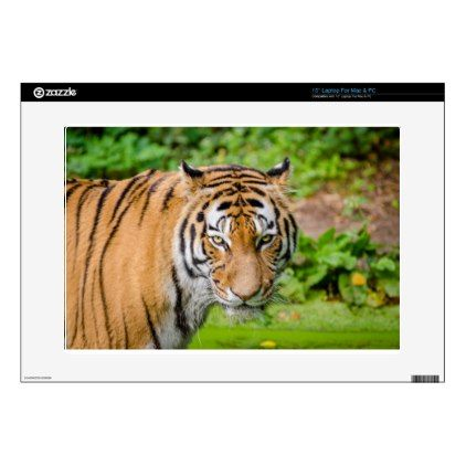 Bengal Tiger on Green Grass Laptop Decals - cat cats kitten kitty pet love pussy