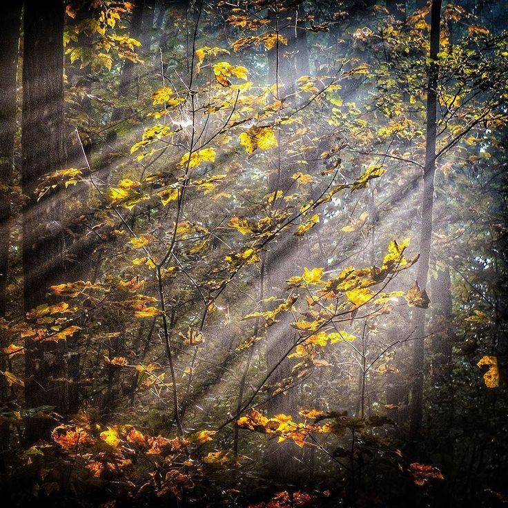 Nie wszystko złoto co się świeci... Jeszcze jedno wspomnienie z wczorajszego wypadu do lasu. Możemy trochę nudzimy ale z nadzieją że wybaczcie :-) #autumn #jesień #jesien #fall #leaves #nature #Polska #Poland #kujawskopomorskie #lubietubyc #lubiepolske #Bydgoszcz #krajobraz #landscape #widok #sun #sunrays #fog #mikrowyprawy