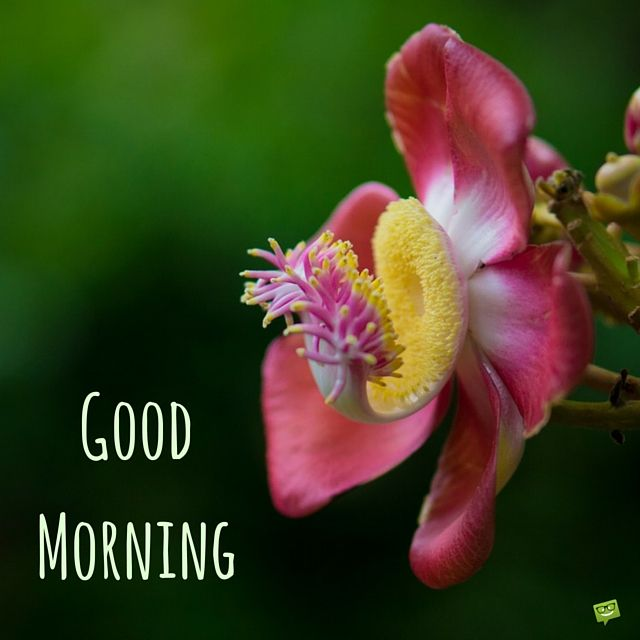 Good morning image with exotic flower
