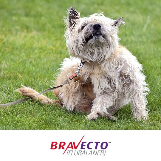 Tick fleas off with BRAVECTO!  Talk to your vet today to learn more about how to protect your dog from fleas AND ticks with BRAVECTO. http://www.mypet.com/bravecto.aspx