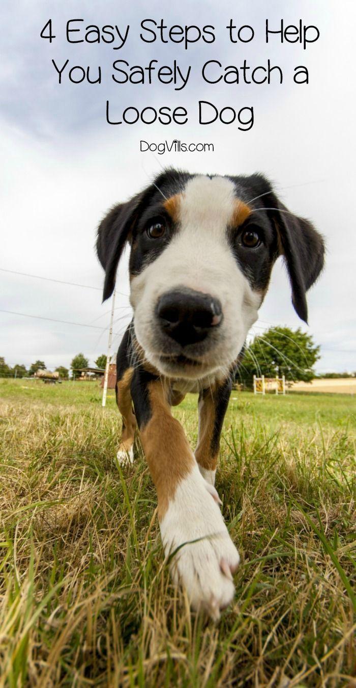How Do You Catch A Loose Dog Very Carefully Follow These Four Easy Steps To Help You Wrangle A Pooch O Dog Behavior Problems Training Your Dog Aggressive Dog