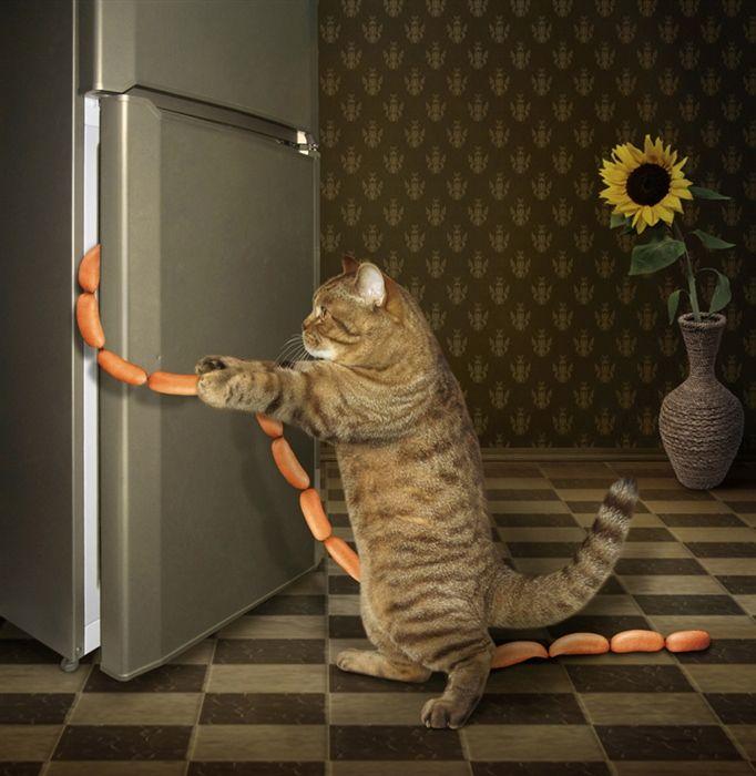 фото кота федота стильного дизайна комфортного
