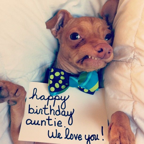 Funny Aunt Birthday Memes : Tuna the dog with dobby today is my best friends