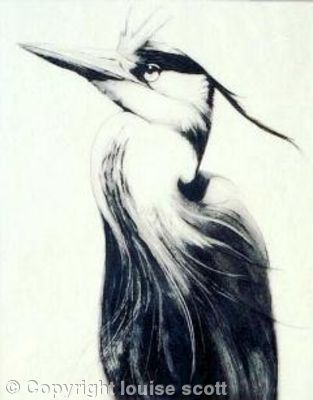 Heron by Louise Scott (etching)