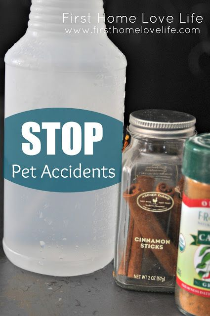 Treat Puppy's favorite indoor potty spots & stop future accidents: 2 C water, 1 T eycalyptus or cinnamon essential oil, 1 T cayenne pepper. Clean the area w/non-amonia product. Spray mixture onto the spot. Make sure to respray the area every 24 hours until the dog completely loses interest in that area.