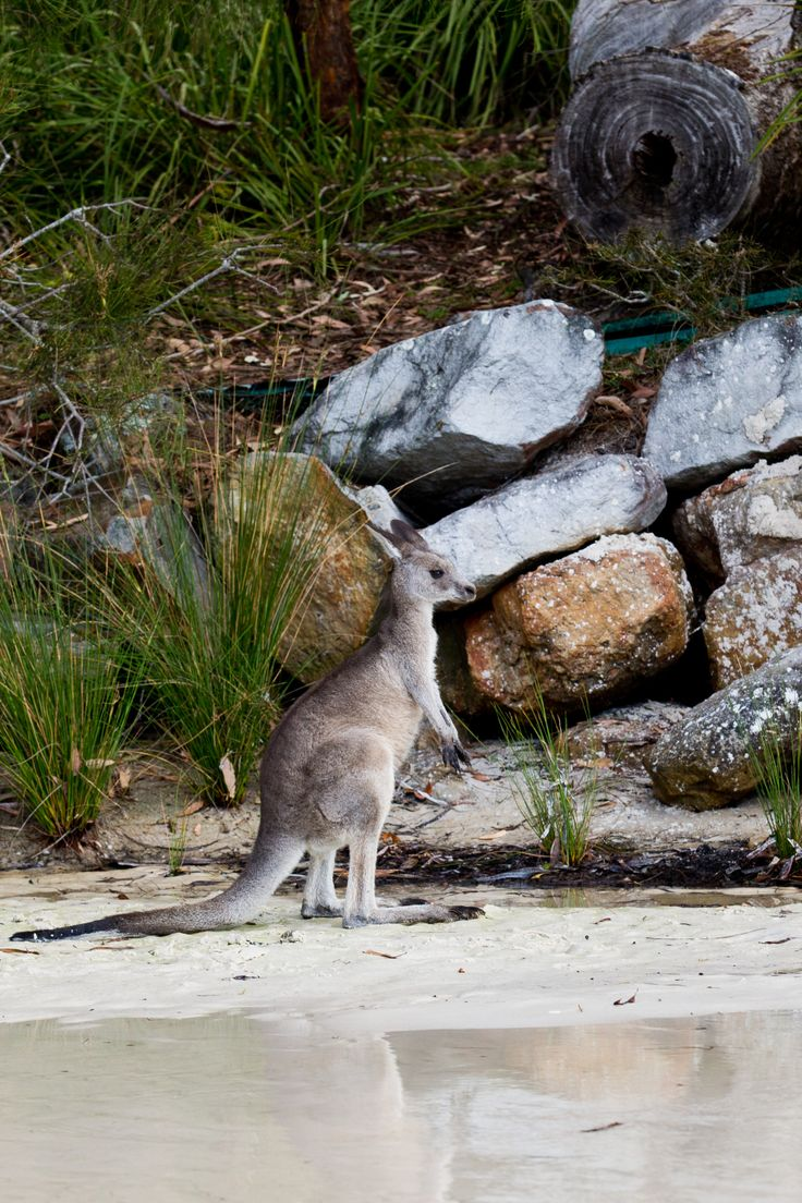 Home to many beautiful creatures and plants... Green Patch Beach |Booderee National Park  Jervis Bay, NSW