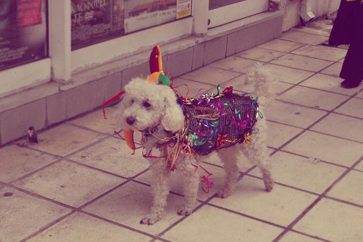 Carnival Doggie @Patricia Broussard, Greece