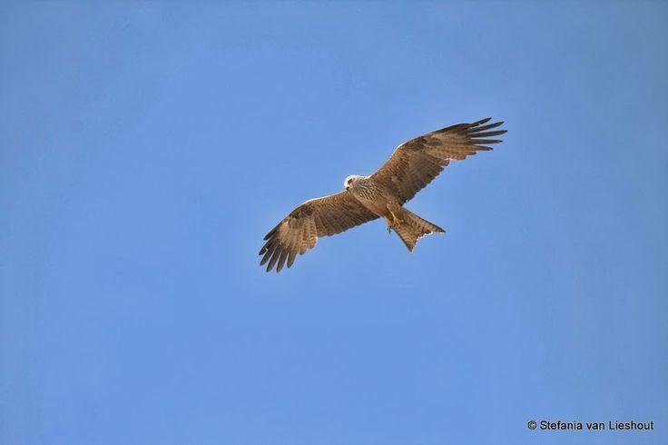 Doñana park, een beschermd natuurgebied waar veel verschillende soorten bedreigde vogels hun heil zoeken.