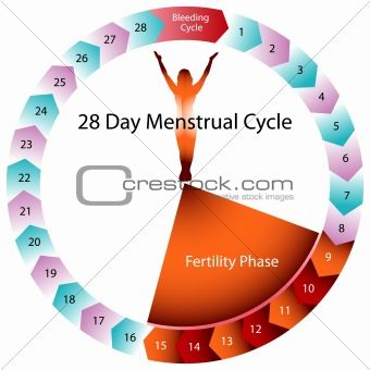 Menstrual Cycle Fertility Chart. The orange or 'days off' pills in a typical cycle have no hormone in them, so it is a 'break'.