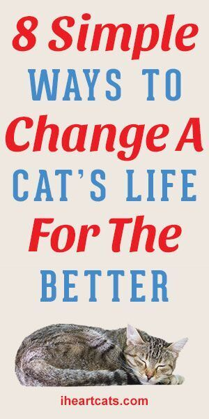 8 Simple Ways To Change A Cats Life For The Better