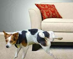 Stop your dog from marking in your house with these steps!