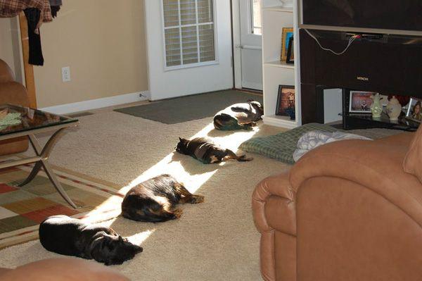 Doggies in da sun.