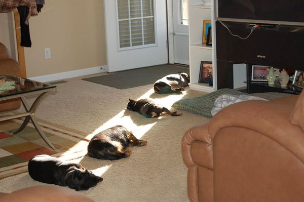 .Lights, Cat, Funny Dogs, Sun Ray, Pets, House, Sunlight, So Funny, Animal