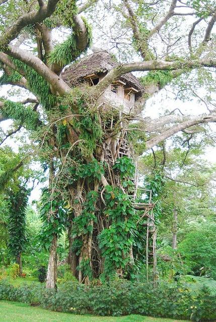 Tree House of Shark Bay , Tanna, Vanuatu