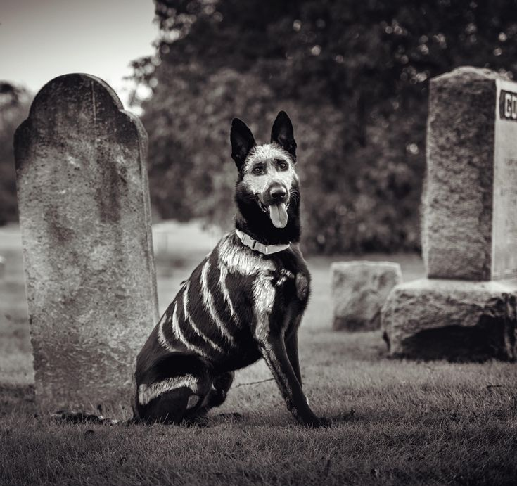 Had a friend give my dog a paint job. Here he is looking extra spooky.  http://ift.tt/2hoAAfa via /r/aww http://ift.tt/2igXapH
