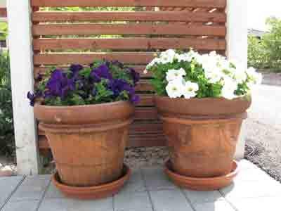 Jatkuvaa kukkaloistoa täydentävät kesäkukat. Petuniat ilahduttavat koko kesän, kun kuihtuneet kukat nyppii pois. Ruukuissa niitä voi siirrellä aina sopivaan kohtaan.