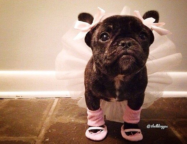 25 Pet Halloween Costumes! Everyone wants to be a ballerina. ~Halloween Costume Ideas from Pittsburgh Ballet Theatre~