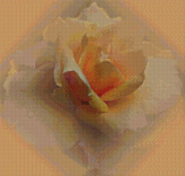 Peach Roses (cross stitch)