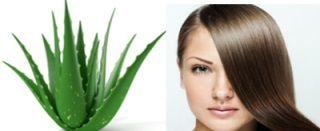 découvrez l'utilisation bénéfique de l'aloe vera sur les cheveux