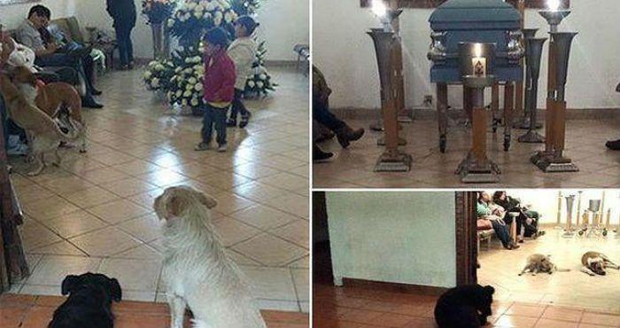 Ciudad de México, 30 de marzo (SinEmbargo).- El pasado 15 de marzo en Cuernavaca, Morelos, falleció una mujer llamada Rosa Margarita Suárez. Al velorio no sólo asistieron sus familiares y amigos, sino también un grupo de perros callejeros que fue alimentado por ella durante varios años.