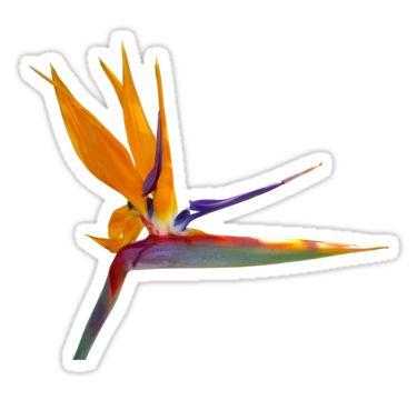 Bird of Paradise Flower Sticker by StickerNuts