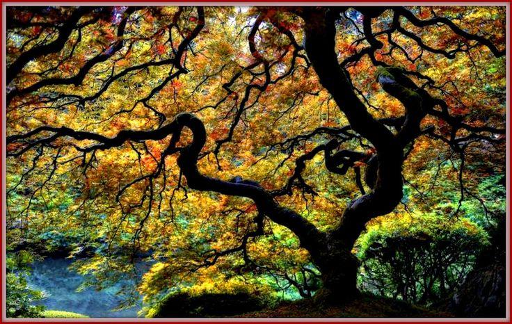 Γη και Ελευθερία.: Τι μας διδάσκουν τα δέντρα για τη ζωή!