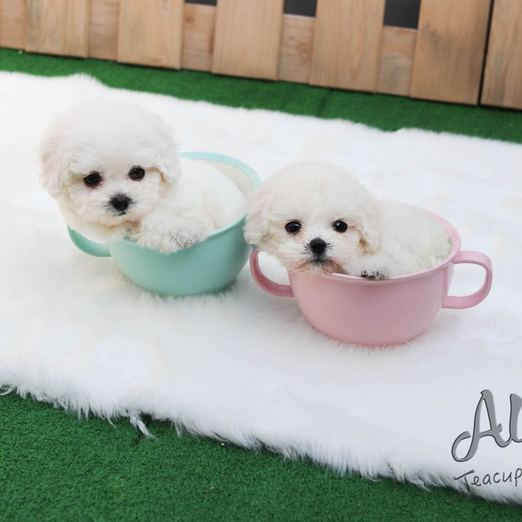 There S Cotton Candy In The Cup One By One Https Www