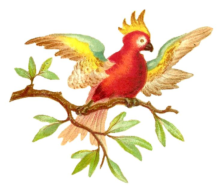 Antique Images: parrot:
