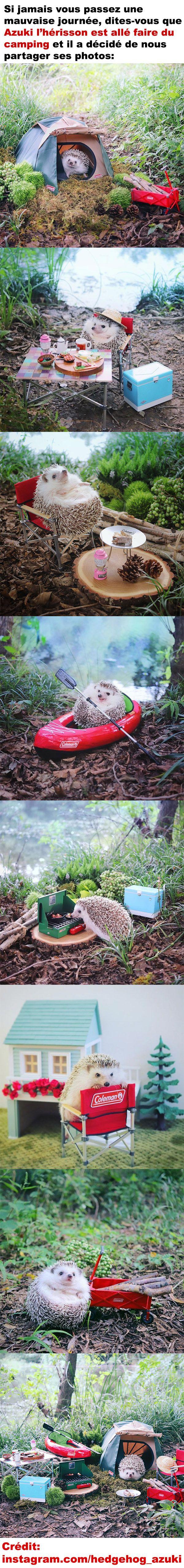 Azuki l'hérisson est allé faire du camping