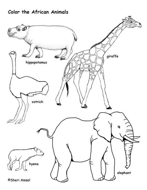 African Animal Coloring Page Printable African Savanna Animals Savanna Animals Animal Coloring Pages