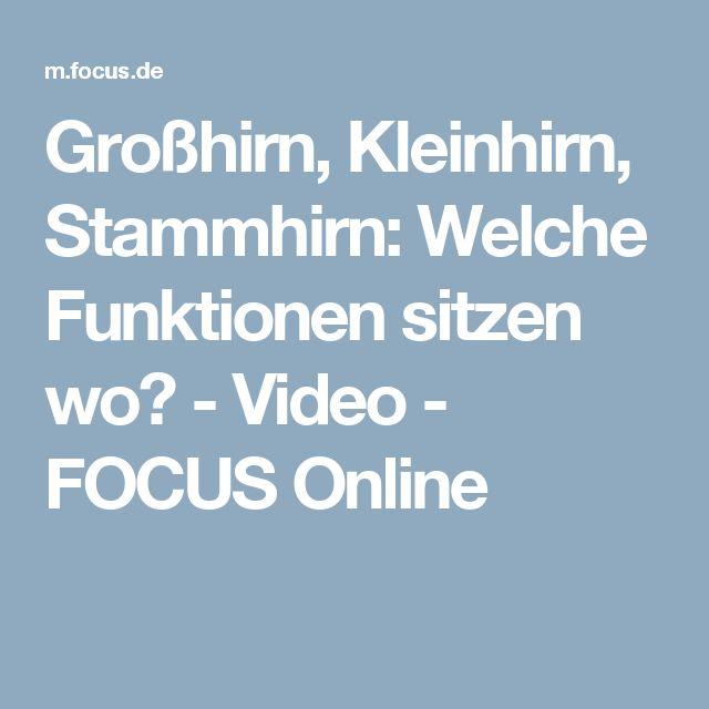 Großhirn, Kleinhirn, Stammhirn: Welche Funktionen sitzen wo? - Video - FOCUS Online