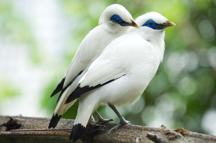 Mejores 76 imágenes de Животные en Pinterest | Pájaros bonitos ...
