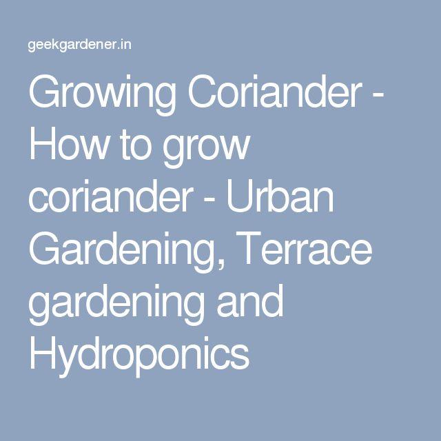 Growing Coriander - How to grow coriander - Urban Gardening, Terrace gardening and Hydroponics