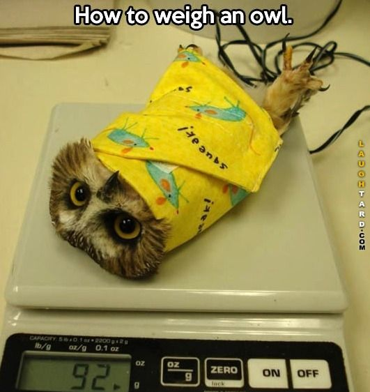 How to weigh an owl