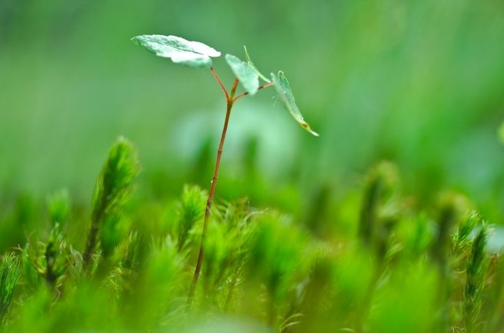 """Search """"sapling"""" Free Photos & Stock Images - Visual Hunt"""