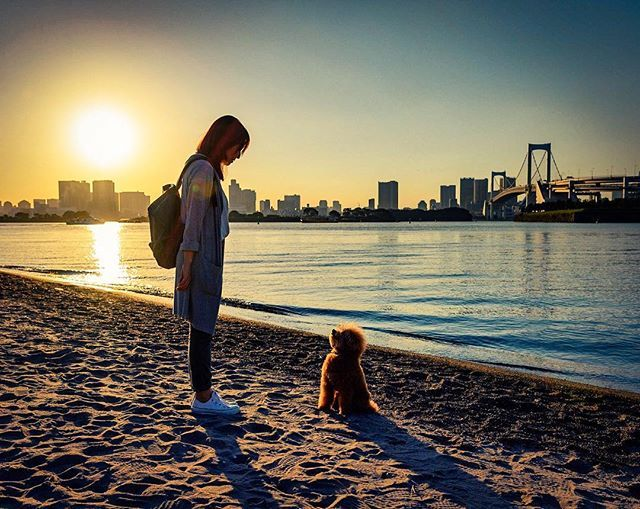 *** ブーさん🐶母とアイコンタクト中✨ . いつぞやの#お台場海浜公園 🐾 最後に#夕焼け を見たのはいつのことやら💧😭 . . #トイプードル  #愛犬 #トイプードル部 #親ばか連合 #犬 #わんぱく部 #dog  #toypoodle #poodle #poodlelove  #IGersJP #whim_life #IG_JAPAN #inulog #tokyocameraclub  #ふぁいんだー越しの私の世界  #ファインダー越しの私の世界  #all_dog_japan #east_dog_japan #dogstagram_japan #inutokyo #lovers_pets #dogstagram #picsofallanimals