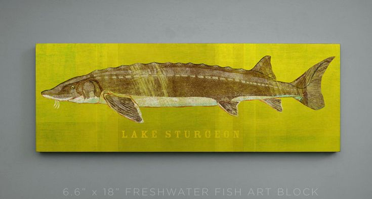 New to johnwgolden on Etsy: Lake Sturgeon Art Block- Lake House Art- Gift for Men- Lake Sturgeon Print- Fishing Presents For Fishermen- Gifts for a Fisherman- Dad Gifts (24.50 USD)