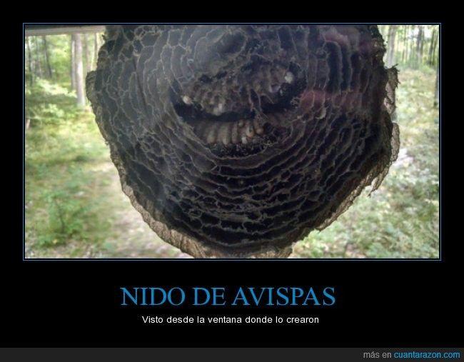 NIDO DE AVISPAS