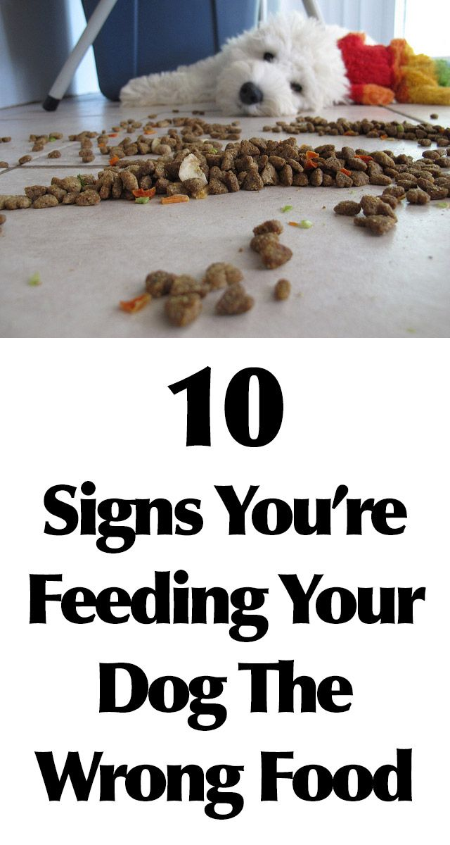 10 Signs You're Feeding Your Dog The Wrong Food http://iheartdogs.com/10-signs-your-feeding-your-dog-the-wrong-food/