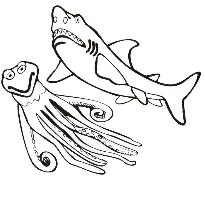 73 besten shark coloring pages bilder auf pinterest haie for San jose sharks coloring pages
