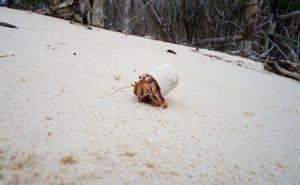 Pollution des océans: La photo d'un bernard-l'hermite alerte Internet — 20minutes.fr