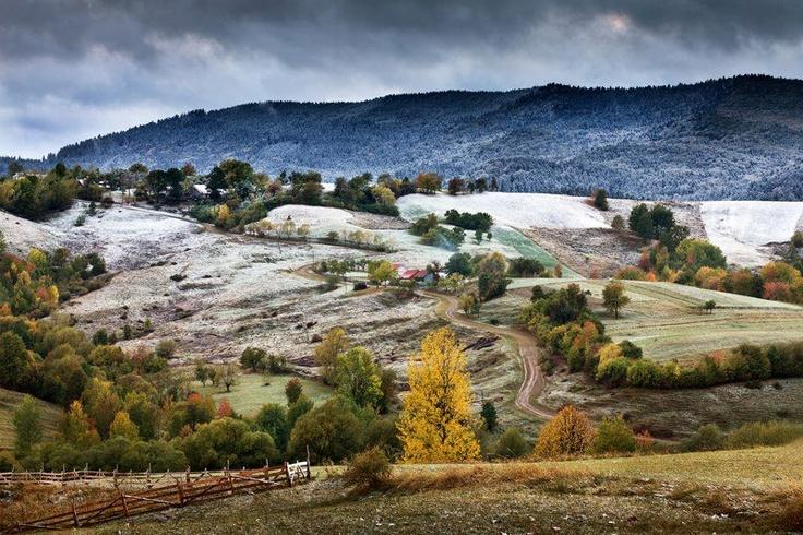 Bucovina, Sorin Onisor