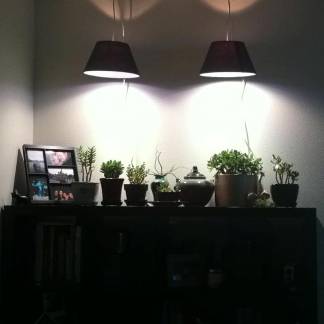 Attractive Grow Lights For Indoor Plants Phillips Plant 640 x 480