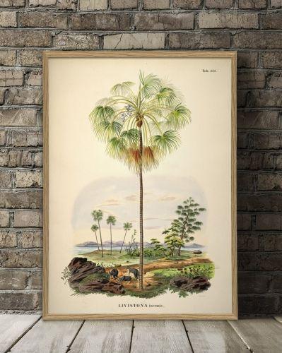 Eksotisk MEGA-plakat med botanisk palmeprint fra The Dybdhal. Orginalbilde er fra tidlig 1800-tallet, og har blitt lett restaurert og digitalisert.Vakker poster som vil gi hjemmet en botanisk atmosfære.Størrelse og materiale: 112x158 cm.Plakaten er printet på matt papir.