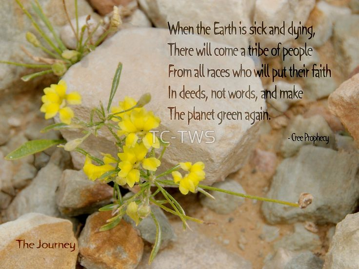 """The Cree prophecy called The Journey which reads; """"When the Earth is sick and dying there will come a tribe of people from all races who will put their faith in deeds, not words, and make the planet green again."""" The words are overlaid on a picture of a yellow flowered wild  plant growing between rocks. • Also buy this artwork on wall prints, apparel, phone cases, and more."""