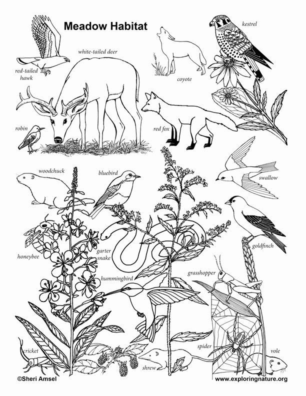 Pin By Beverly Bickle Barkema On Drawing Colouring In 2020 Coloring Pages Animal Habitats Habitats