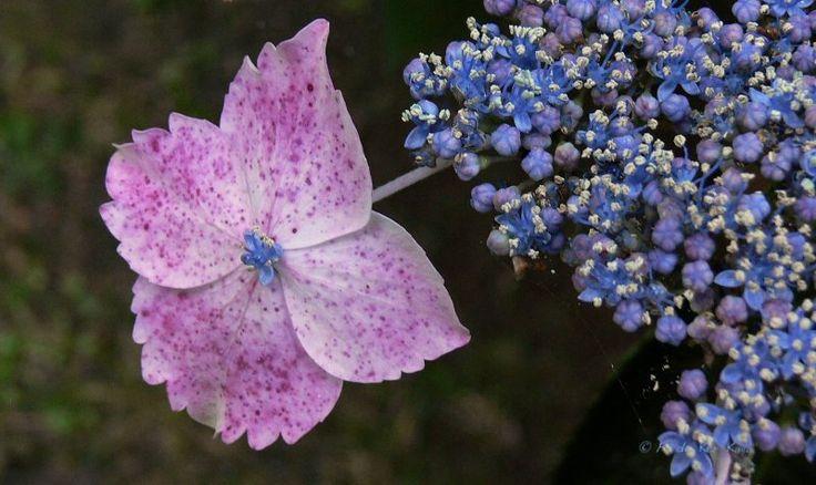 Pointillisme floral